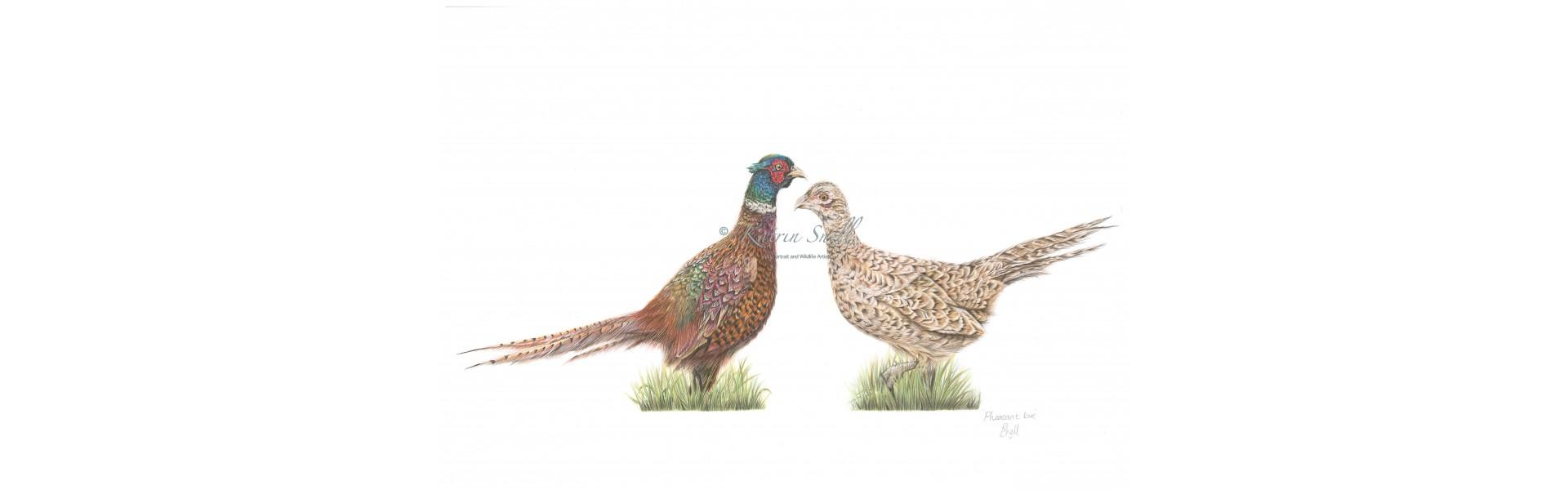 Pheasant love