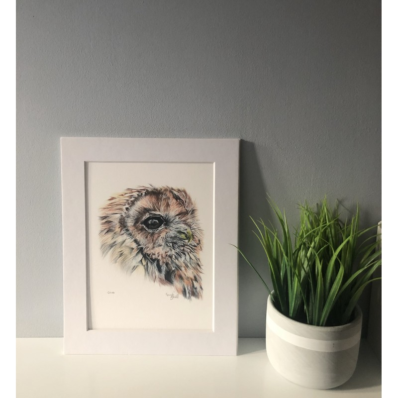 Owl, 8x6 Limited Edition Giclee Print (Mounted)