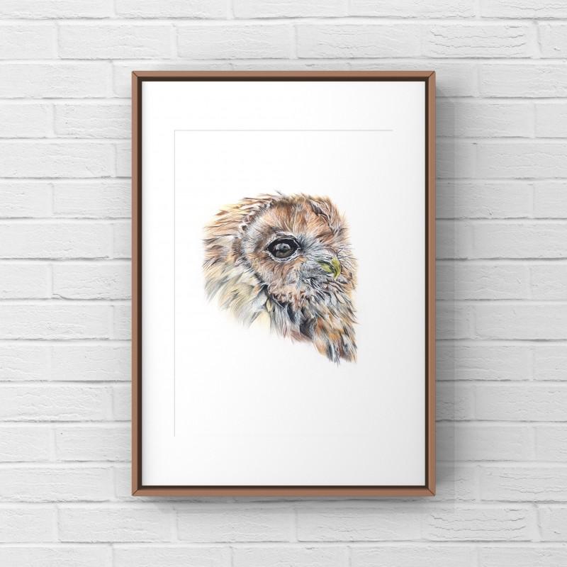 Owl 8x6