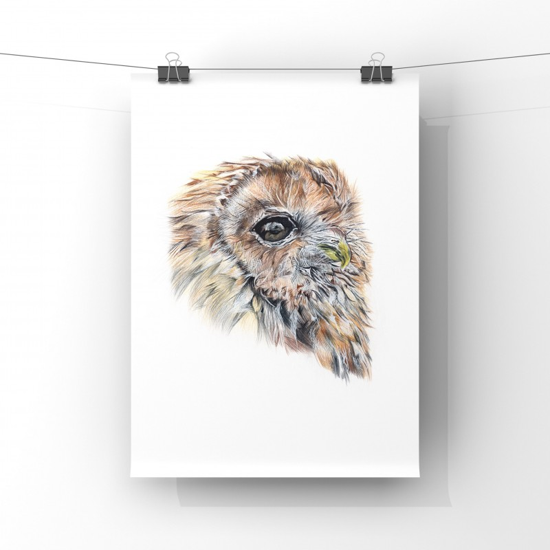 Owl, Limited Edition Giclee Print