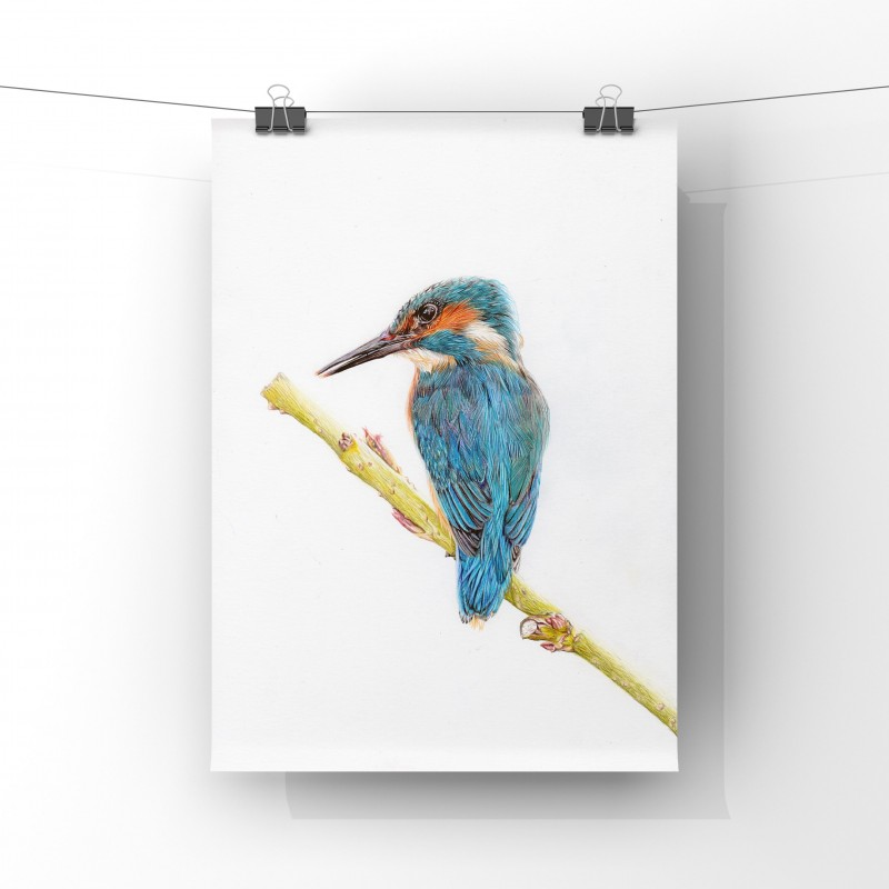 Mr Fisher, 8x6 Limited Edition Giclee Print (unmounted)
