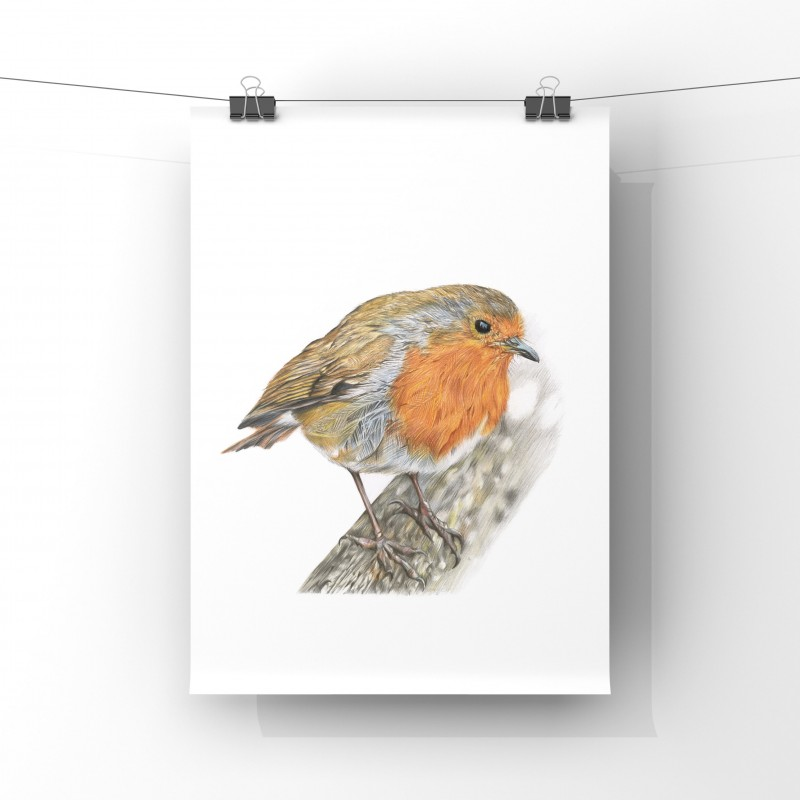 Rockin Robin, A4 Limited Edition Giclee Print (unmounted)