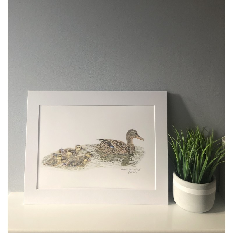 Mothers Little Ducklings, A4 Limited Edition Giclee Print  (Mounted)