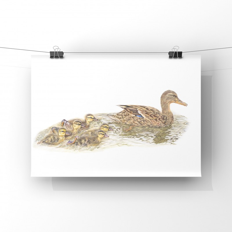 Mothers Little Ducklings, A4 Limited Edition Giclee Print (unmounted)