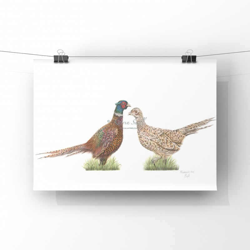 'Pheasant  Love' A4 Limited Edition Giclee Print (unmounted)