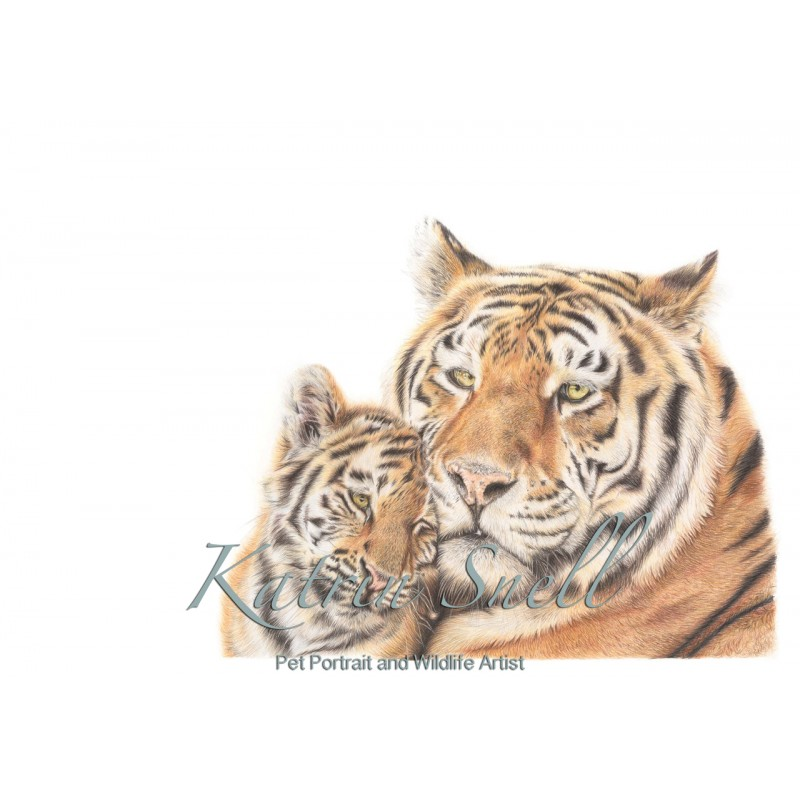 'Tiger Love' A3 Limited Edition print